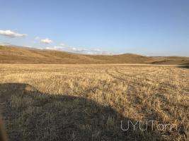 Hoxatarac Kotayqi marz gyux Akunqum 4500m2 poxanakum